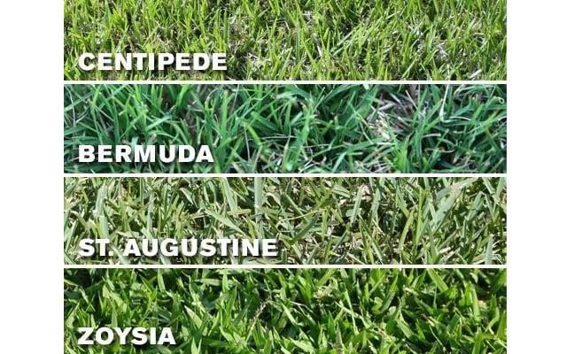 Grass types